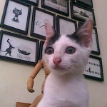 Distemper Kucing